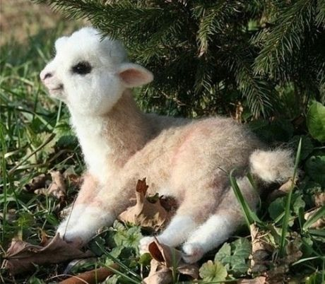 It's the most wonderful camelid of the year. On my wish list: a baby alpaca