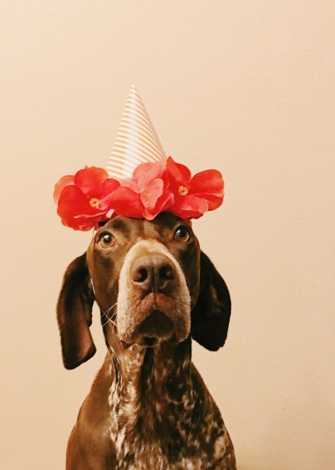 Escapism: this dog is having an amazing birthday.